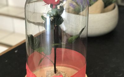 Rosa eterna… ¡SORPRENDE CON MAGIA!
